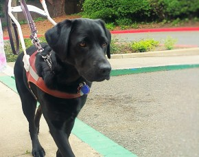 Monday Motivation: Cactus, the Guide Dog